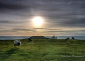 sheep-at-worms-head
